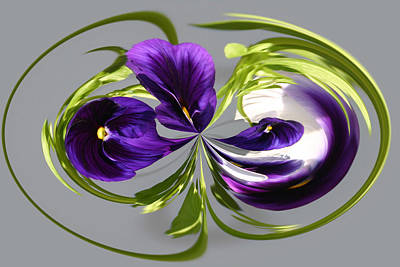 Pansy Series 801 Poster