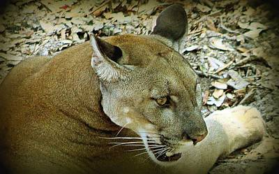 Poster featuring the photograph Panther by Debra Forand