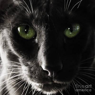Panther Eyes Poster