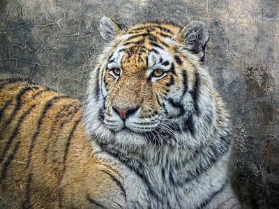 Panthera Tigris Poster by Joachim G Pinkawa