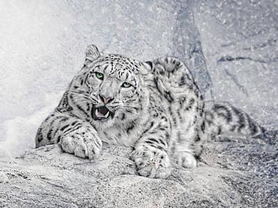 Panthera Uncia Poster