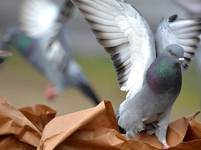 Paper Bag Pigeons Poster by Fraida Gutovich