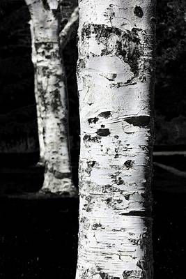 Poster featuring the photograph Paper Birch by Aaron Berg