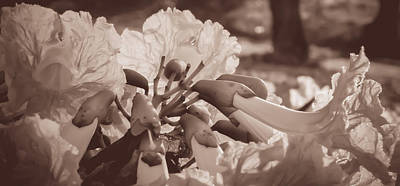 Paper Flowers - Sepia  Poster