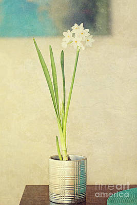 Paper Whites On Table Poster by Susan Gary