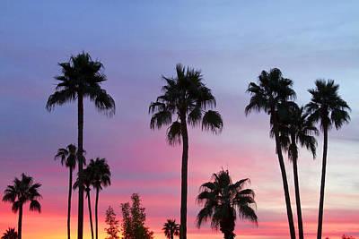 Paradise Palm Tree Sunset Sky Poster