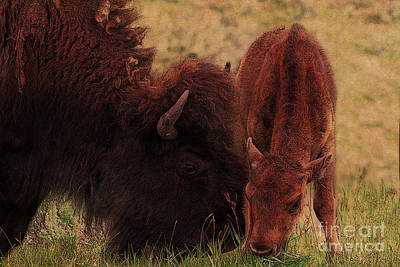 Parent With Newborn Calf Bison Poster by Janice Rae Pariza