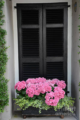 Paris Pink Hydrangeas Window Box - Paris Hydrangeas Window Box Art Poster by Kathy Fornal