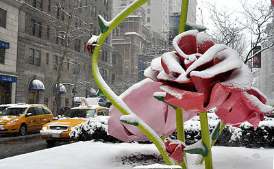 Park Avenue Rose In The Snow Poster by Diane Lent