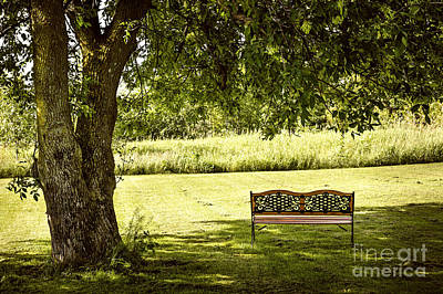 Park Bench Under Tree Poster by Elena Elisseeva