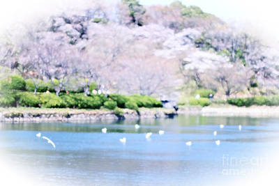 Park With Pond And Cherry Blossoms In Spring Poster