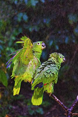 Parrot In Rain, Honduras Poster