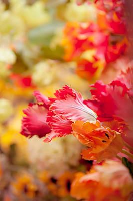 Parrot Tulips 1. Amsterdam Flower Market Poster