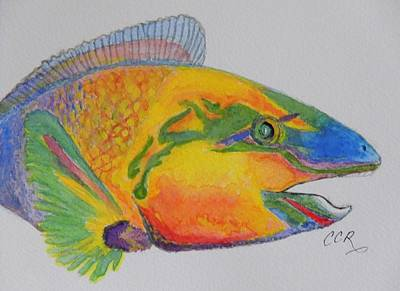 Parrotfish Poster by Connie Campbell Rosenthal