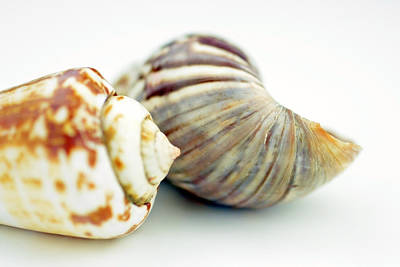 Part Of Sea Shell  Poster
