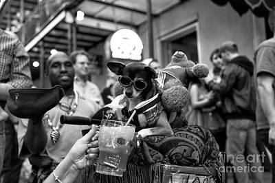 Party Dog On Bourbon Street Mono Poster
