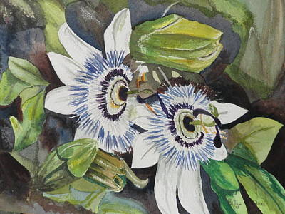Passiflora Cerulia Poster by Betty-Anne McDonald