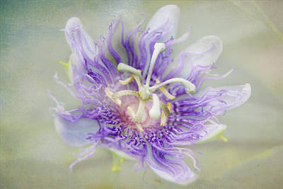 Passion Flower Poster by Judy Hall-Folde