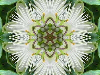 Passion Flower Mandala Poster