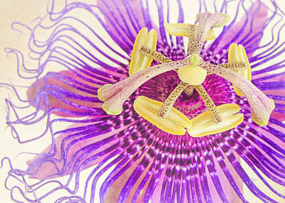 Passion Flower Poster by TK Goforth