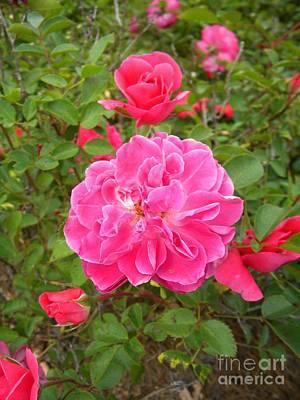 Passionate Pink Springtime Poster