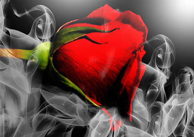 Passionate Red Hot Smoky Rose Poster by Georgiana Romanovna