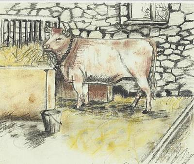 Cow In A Barn Poster