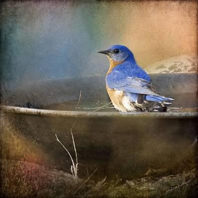 Pastel Eastern Bluebird Poster