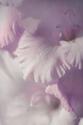 Pastel Gladiolus Poster
