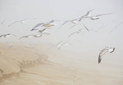 Pastel Gulls In Fog Poster by Kenneth Albin