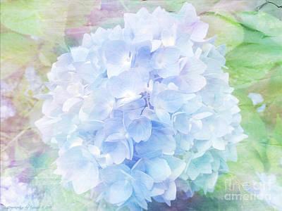 Pastel Hyacinth Poster