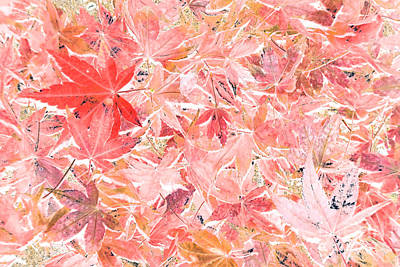 Pastel Impressions Of Autumn By Kaye Menner Poster