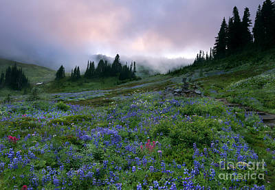 Pastel Mountain Dawn Poster by Mike Dawson