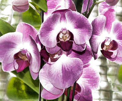 Pastel Orchids Poster