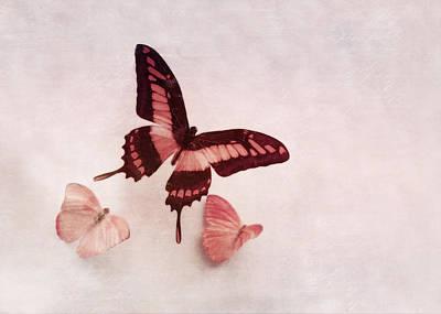 Pastel Pink Butterflies Poster