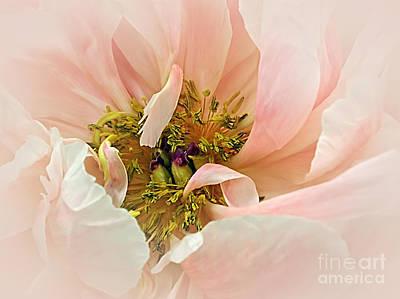 Pastel Pink Peony Poster by Kaye Menner