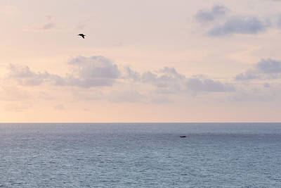 Pastel Sunset Sky At The Ocean Seascape With Flying Birds Photo Art Print Poster