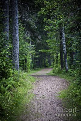 Path In Dark Forest Poster