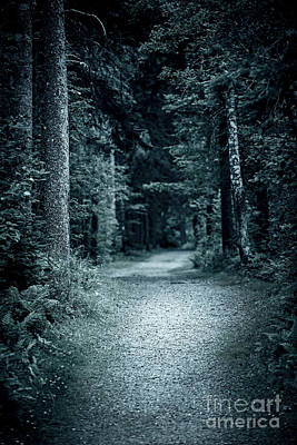Path In Night Forest Poster