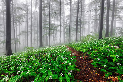 Path In The Mist Poster by Evgeni Dinev