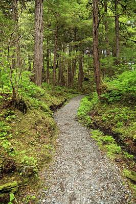 Path Inside Tongass National Forest Poster