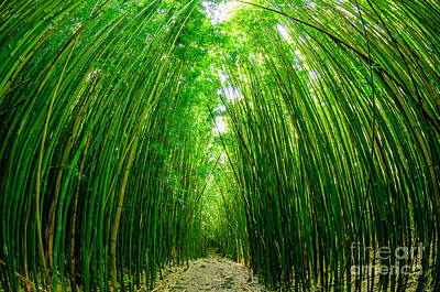 Path Through A Bamboo Forrest On Maui Hawaii Usa Poster
