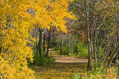 Path Through Autumn Trees Poster