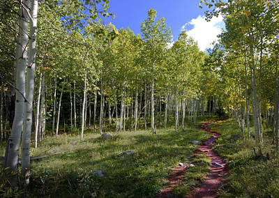 Path Through The Aspens In Colorado Poster