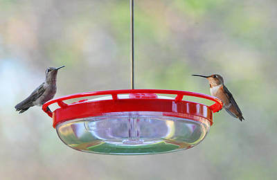 Peace At The Feeder Poster by Lynn Bauer