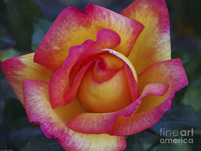 Peace In Floral Format Poster by Kathy McClure