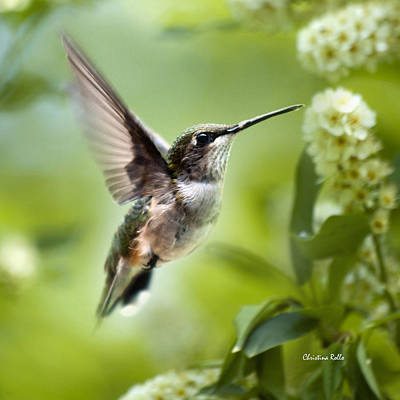 Peaceful Love Hummingbird Square Poster