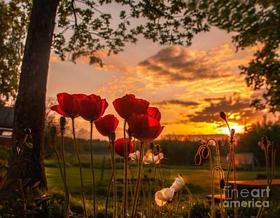 Poster featuring the photograph Peaceful Poppy by Rose-Maries Pictures