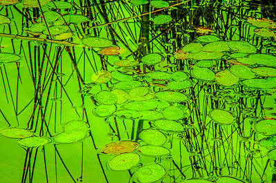 Lily Pads And Reed Reflections Poster