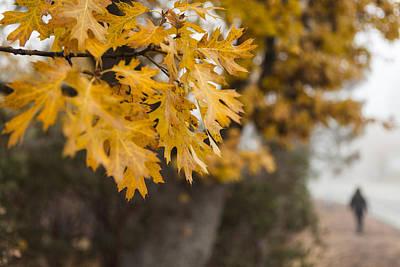 Peacefull Fall Walk Poster